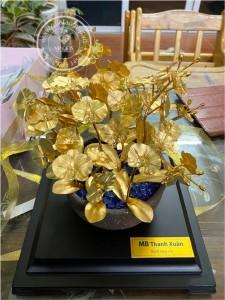 Hoa lan mạ vàng 1